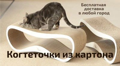 когтедралка для британской кошки